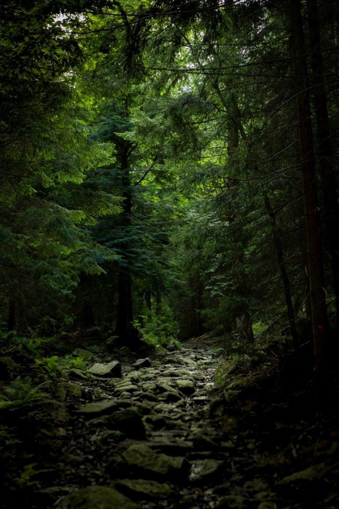 Las w Rudawach Janowickich