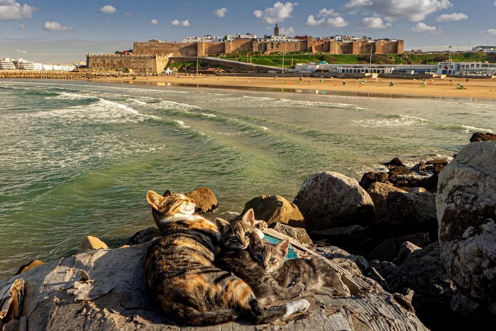 Ocean w Rabacie Maroko