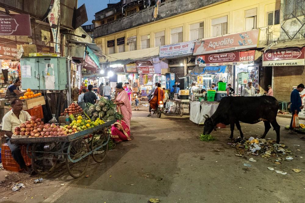 Święte krowy Waranasi Indie