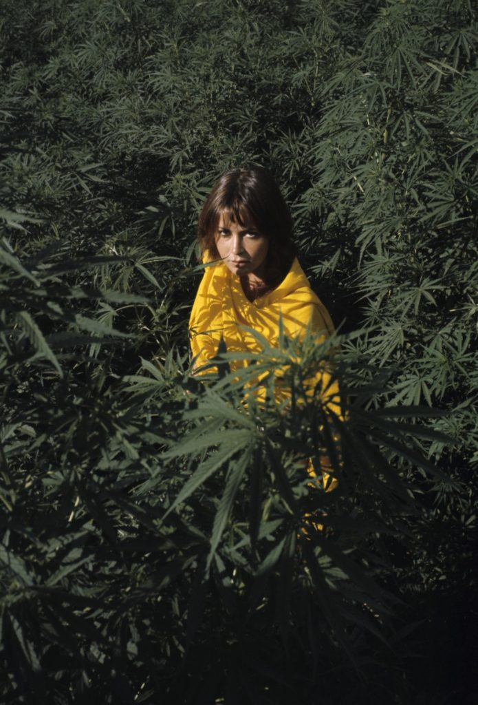 Hippie Trail zioło palenie
