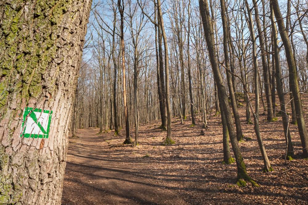 Dębowy las