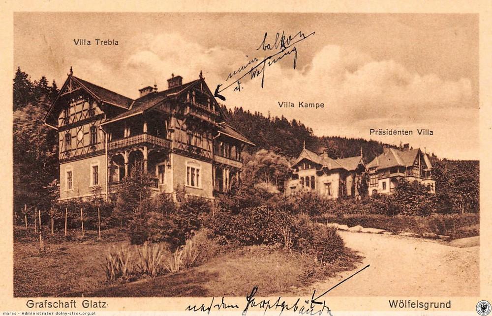 Kolonia willowa. 1930-1938