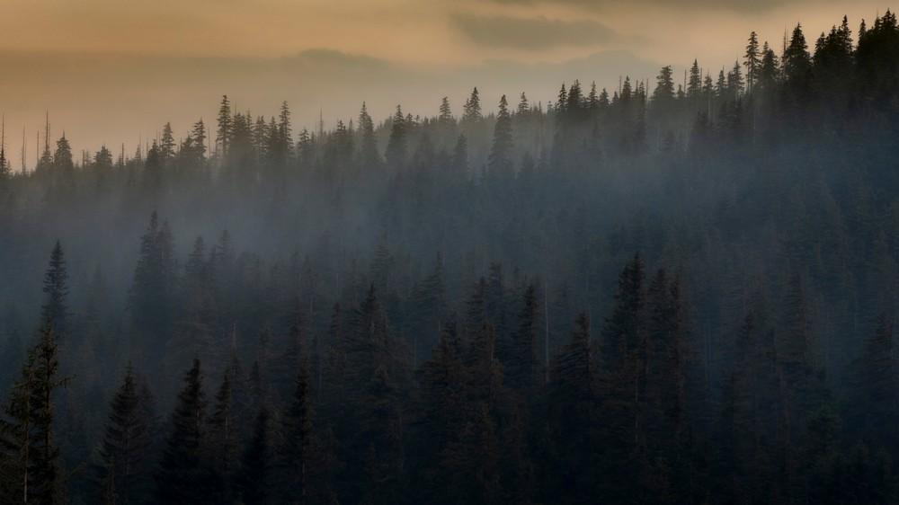 Melodie wieczornych mgieł :-)