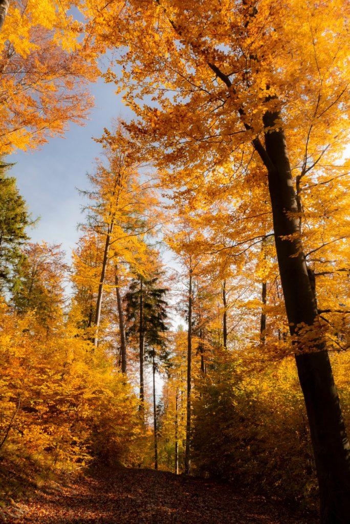 Góry Ołowiane jesienią
