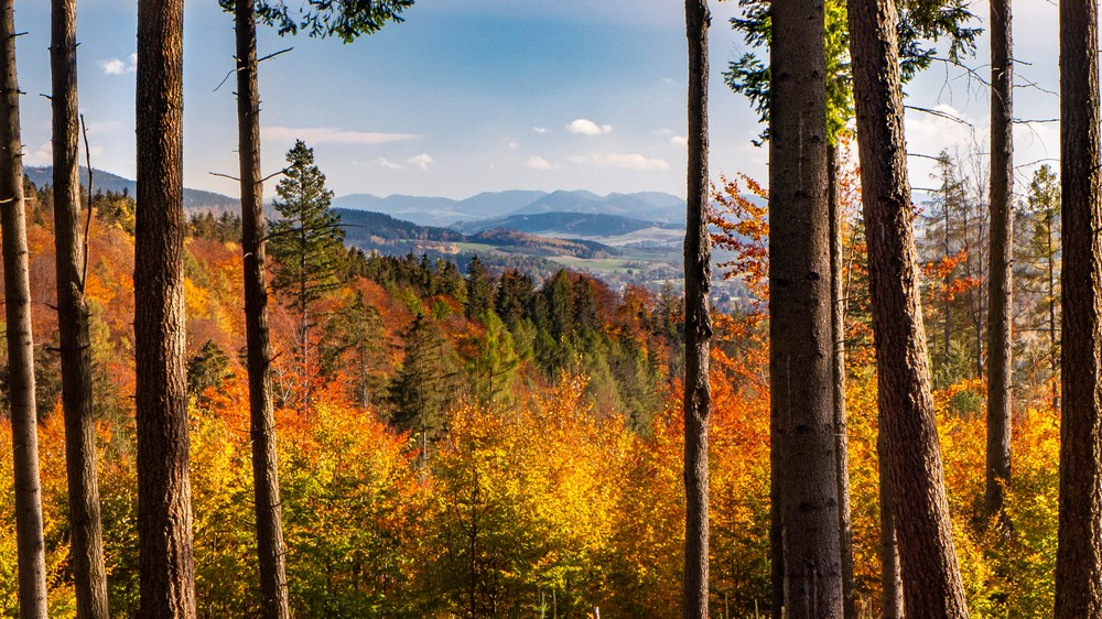 Góry Ołowiane i Sudety Wałbrzyskie w tle
