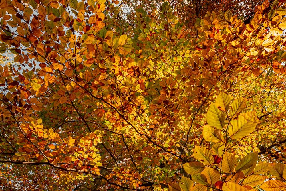 Jesień w Janowicach Wielkich