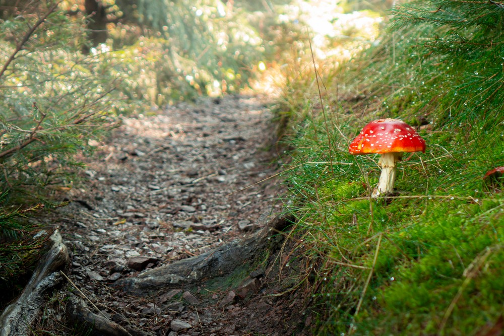 Jesień spotkana na szlaku